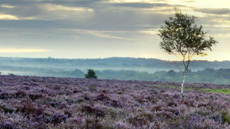 Hauntingly beautiful New Forest